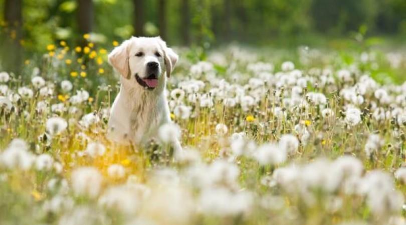 Köy'de Kedi ve Köpekler İçin Özel Alanlar