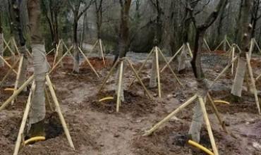 Zekeriyaköy'deki Köy'de 232 ağaç taşıdılar – Haberkolaj.com